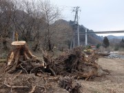 上湯原の水没予定地では、遺跡の発掘調査のため、木が根こそぎ取り除かれている。