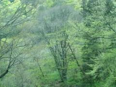 水没予定地の森
