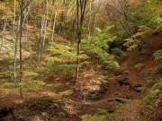 ダムに水没する名勝・吾妻渓谷上流部の遊歩道