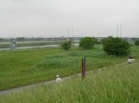 利根川の治水基準点、群馬県伊勢崎市八斗島(やったじま)地点