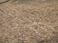 西宮遺跡の畑の火山灰HP