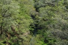 吾妻渓谷の新緑HP2