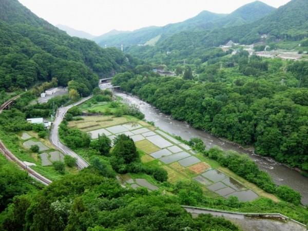 吾妻川と国道に挟まれた林地区の久森(くもり)田んぼ。2014年6月8日撮影。