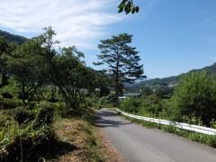 上湯原の松の木の道shuku