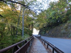 八丁暗がり付近の国道の黄葉shuku