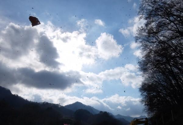 落葉トリミングshuku