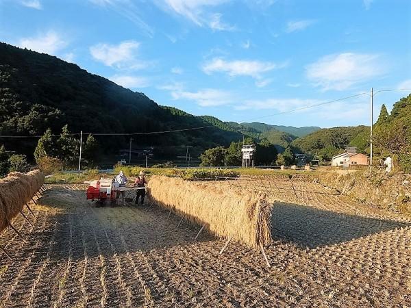 石丸さんちの稲刈りs