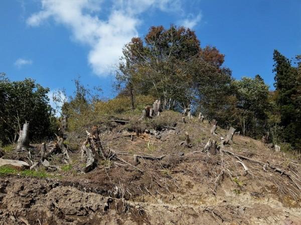 三ッ堂周辺の伐採